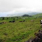azoren-2012-0059