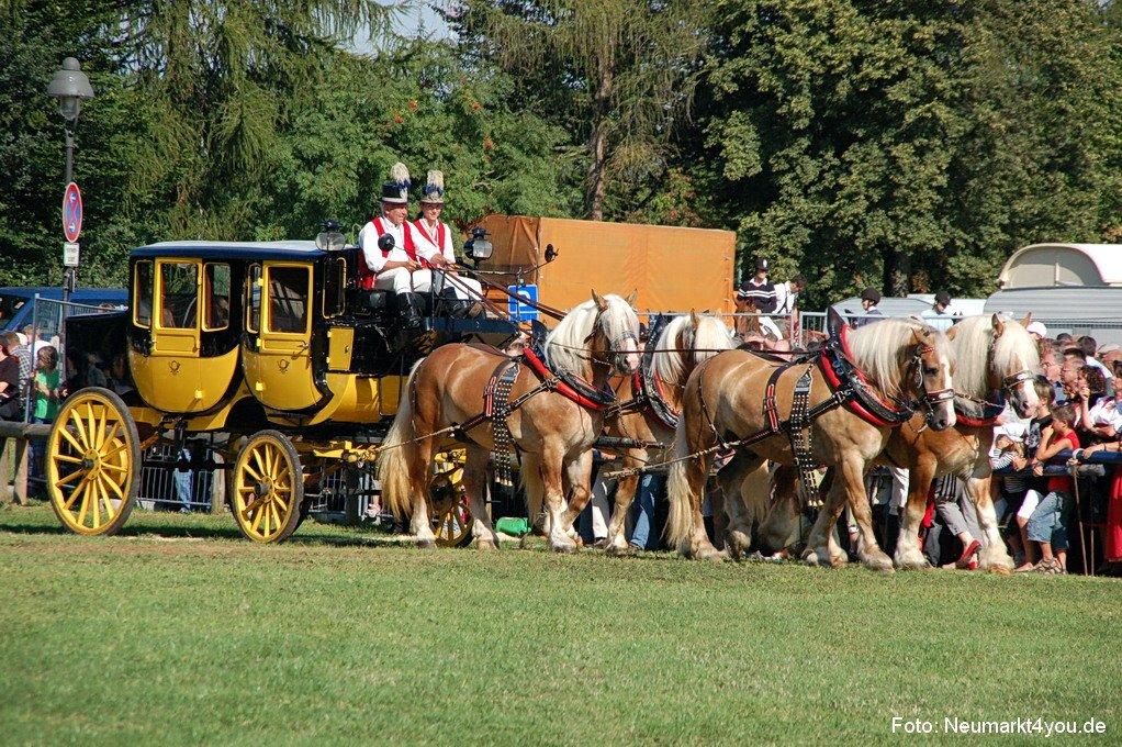 Parken Auf Grünfläche Pferde Und Fohlenschau Am Volksfest Neumarkt  Neumarkt4you